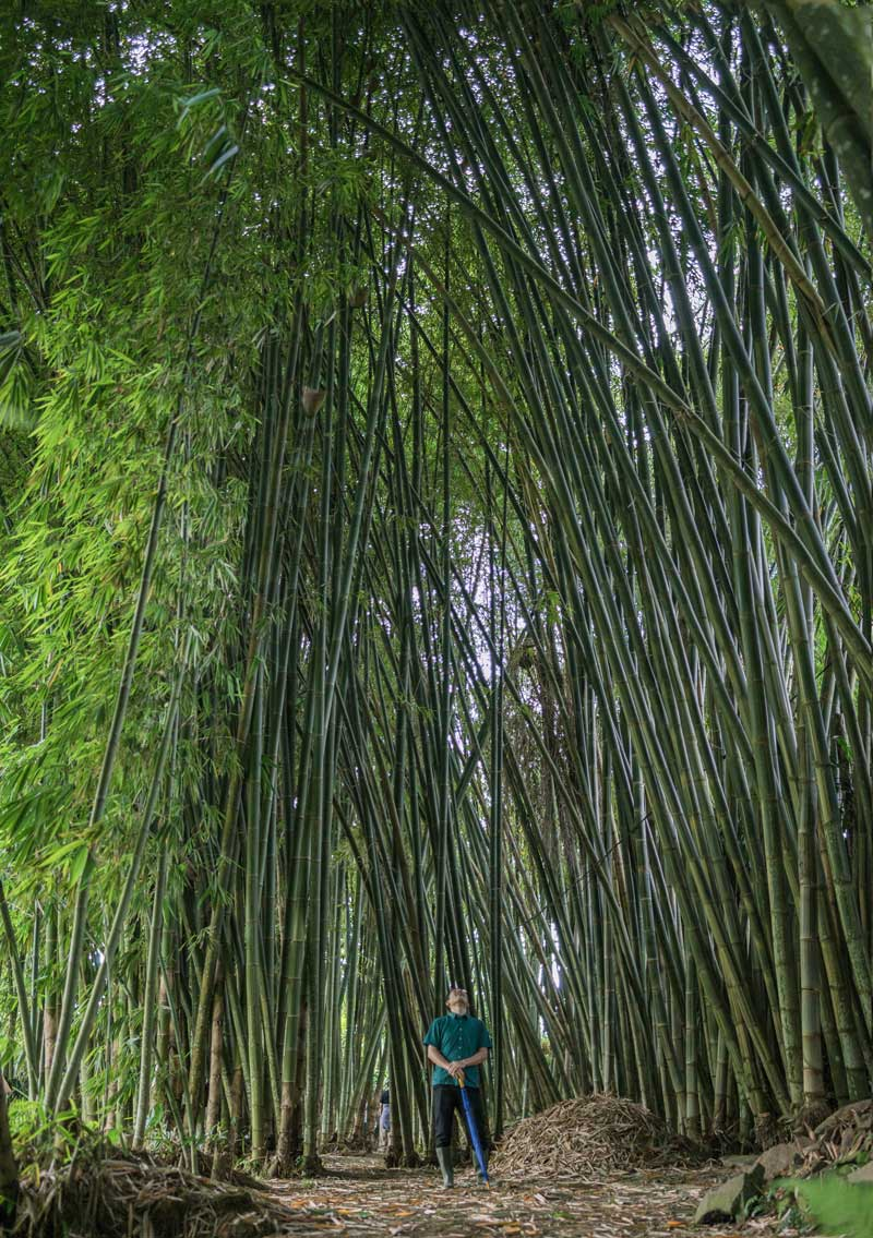 Bamboo Forest Bathing