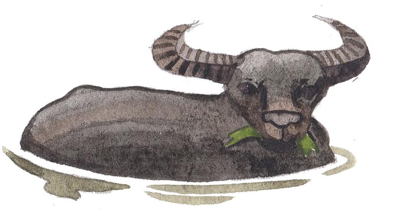 sukasantai-map-buffalo