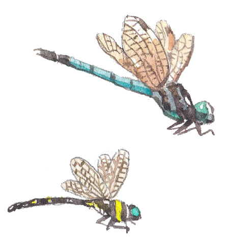 sukasantai-map-dragonfly