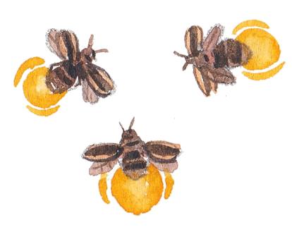 sukasantai-map-fireflies
